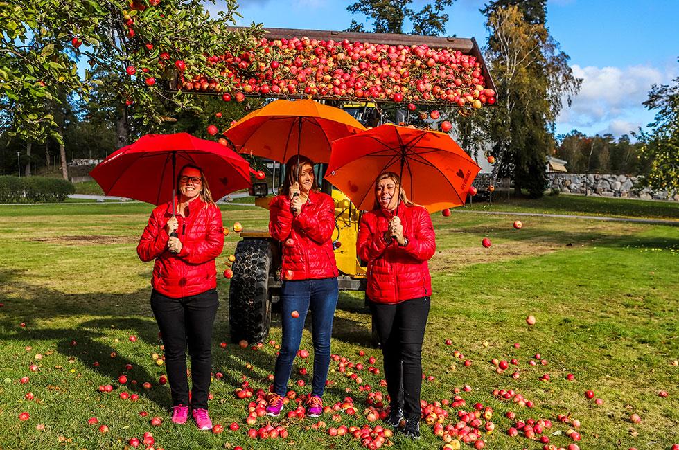 Äppelskörd på Happy Tammsvik
