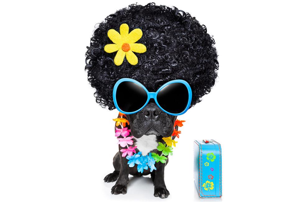 dog-puff