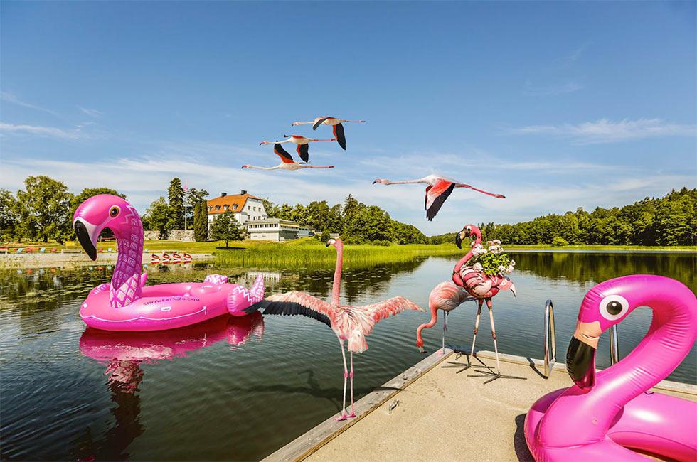Bästa aprilskämtet - flamingofamilj flyttar in på Happy Tammsviks Konferenshotell